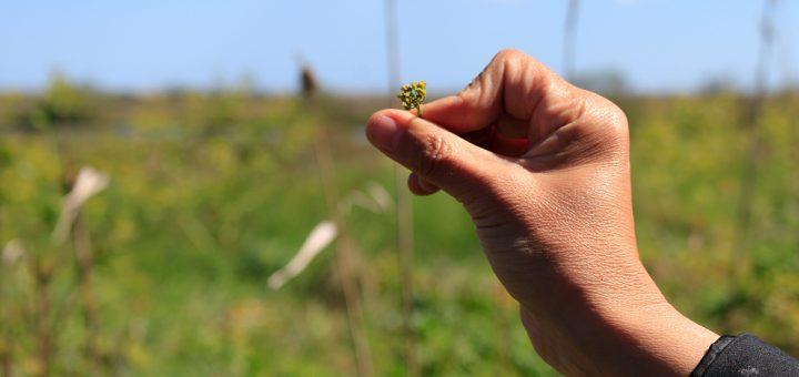 Un exemple de plante comestible