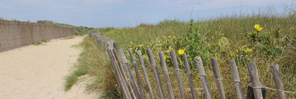 Les ganivelles favorisent la reconstruction des dunes.
