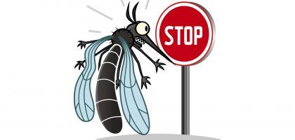 moustiqueTigre